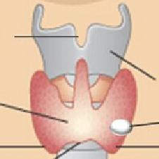 什么是甲状腺结节